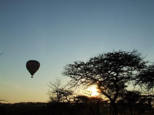 Tanzania at sunset - Blue Tanzanite Gold Earrings